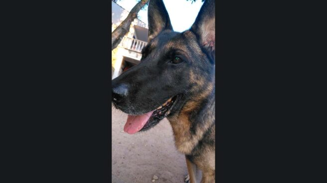 Uno de los ex agentes caninos vetados en un acto en Cataluña.
