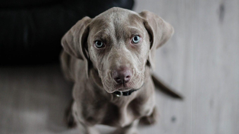 Resultado de imagen para perros