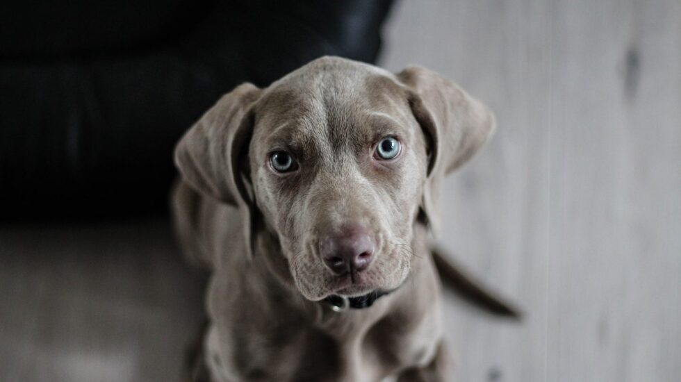 Tu perro te quiere decir algo.