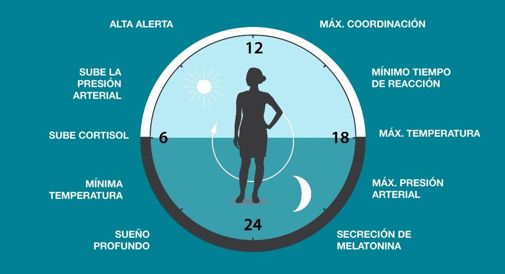 El reloj biológico clásico