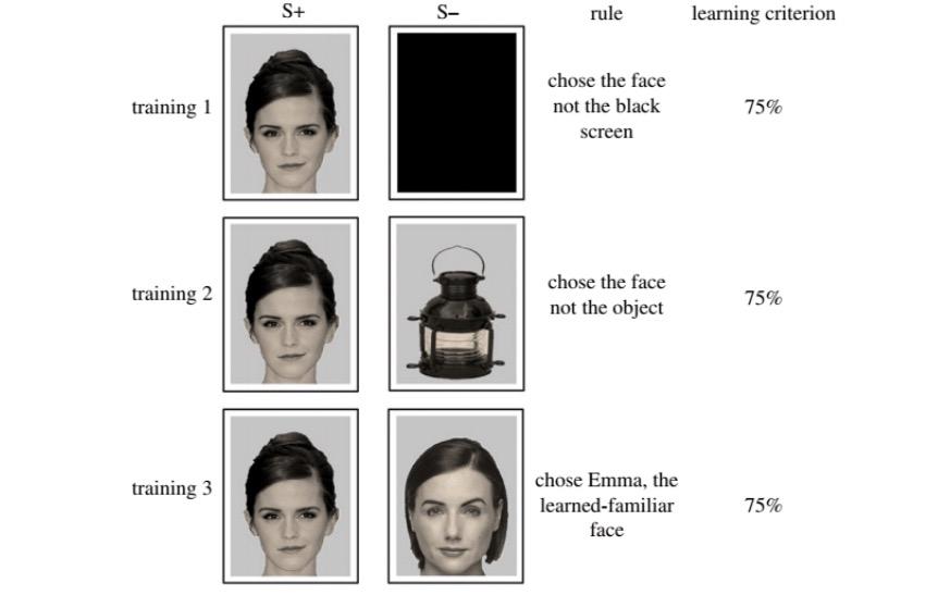 Patrón de reconocimiento de rostros a través de fotos de famosos
