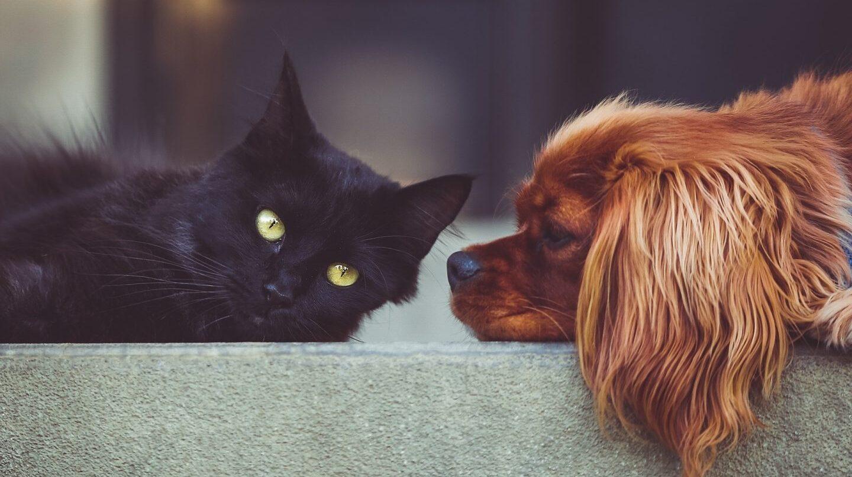 La ciencia emite su juicio, los perros son más listos.