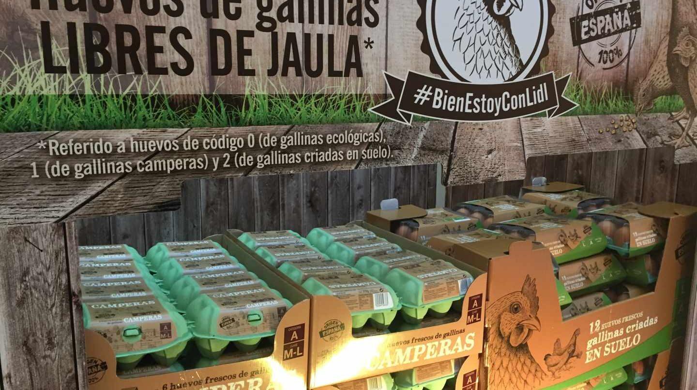 Lidl, primer distribuidor nacional en dejar de vender gallinas criadas en jaula