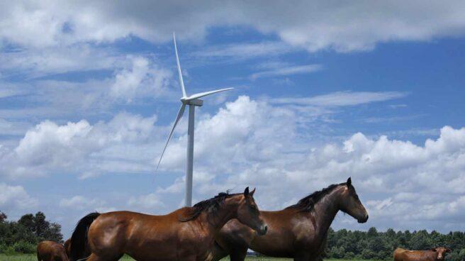 Parque eólico de Amazon gestionado por Iberdrola.