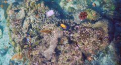 Corales plagados de basura de plástico en el Pacífico