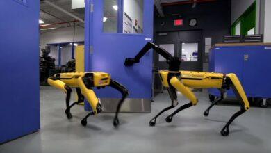Los perros-robot de Boston Dynamics han aprendido a coordinarse y abrir puertas