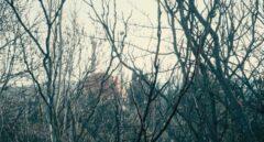 Los restos de la central de Zorita en desmantelamiento, entre el sotobosque del Tajo