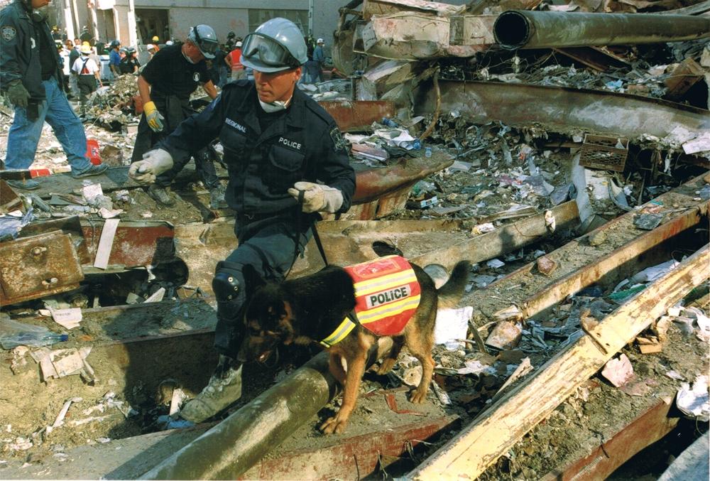 Trakr, un perro héroe del 11S, fue clonado.
