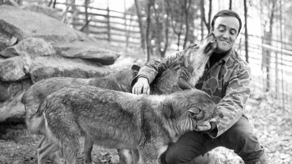 Félix Rodríguez de la Fuente con sus lobos.