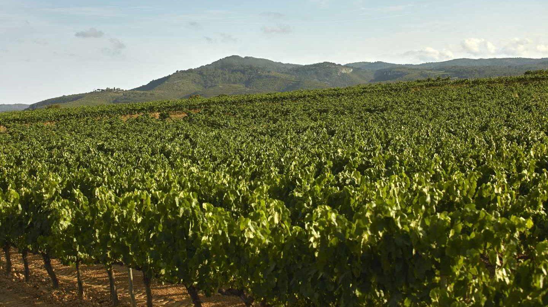 Una campaña denuncia la ineficiencia y los riesgos para la salud de las subvenciones al vino.