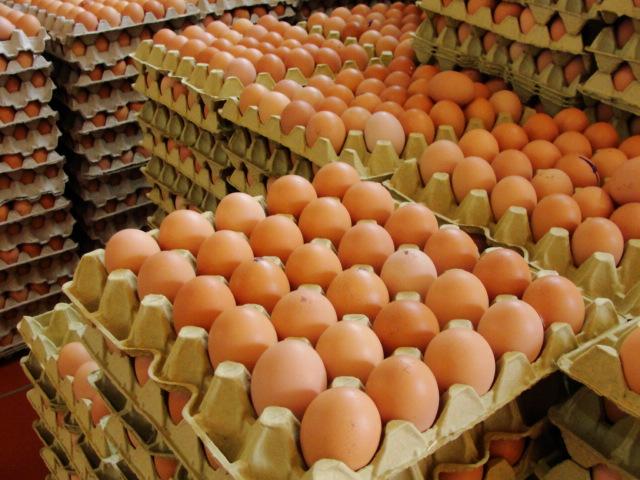 Huevos morenos de gallina.