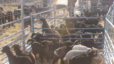 Ley de bienestar animal: prohibida la cría a particulares, la compra de animales en tienda y reconversión de los zoos