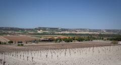 Vega Sicilia contra la Autovía del Duero