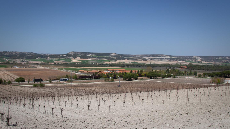 Viñedos de Vega Sicilia atravesados por la N-122.