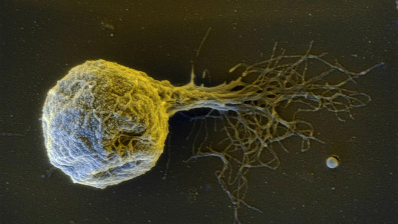 Methancaldococcus villosus, arquea compatible con algunas condiciones de Encélado