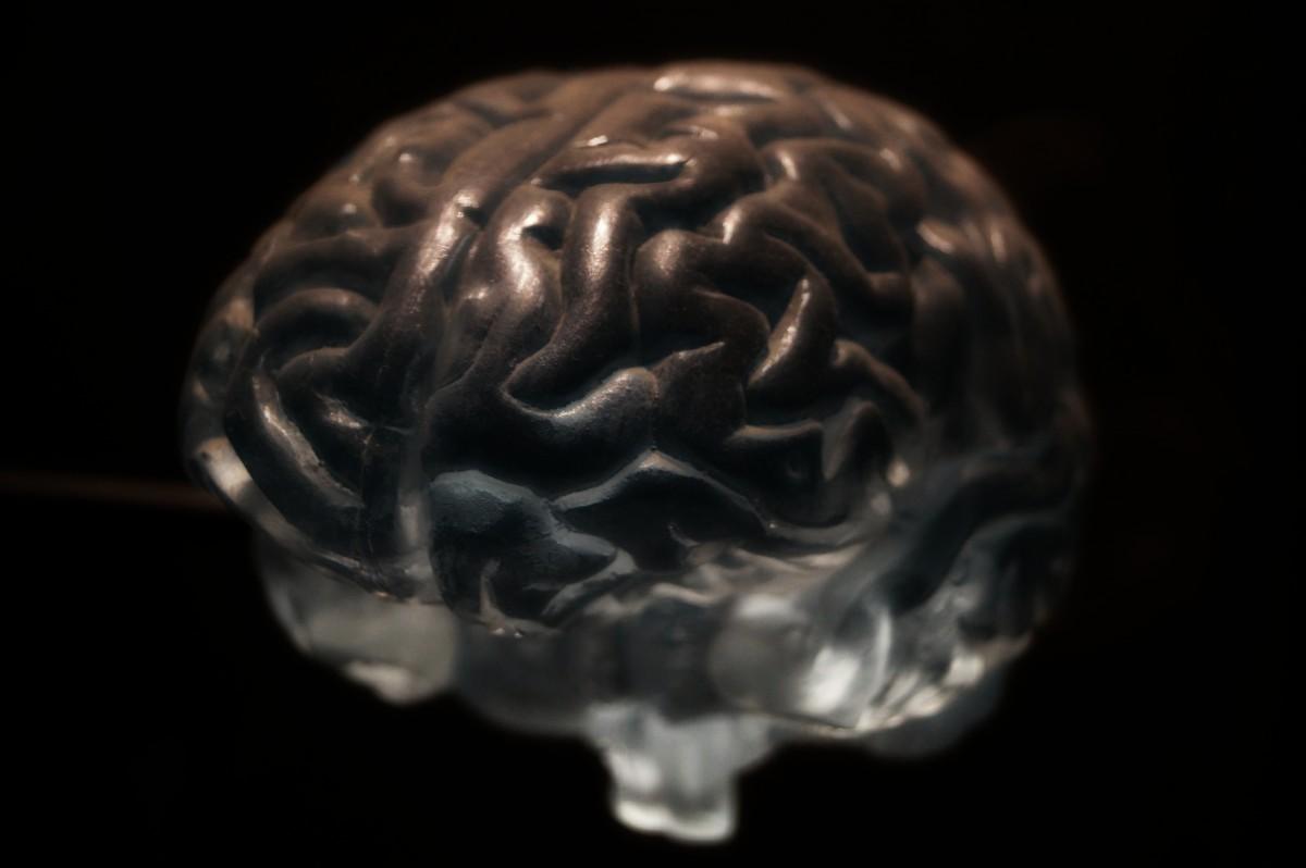 Descubierto un nuevo mecanismo para reforzar las redes cerebrales de la memoria.
