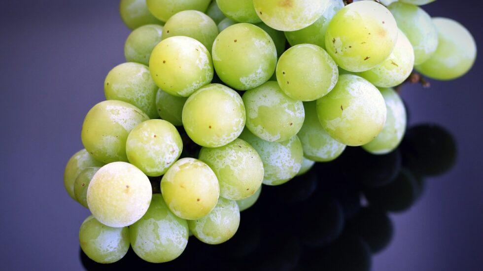 El resveratrol, presente en las uvas y otras frutas y plantas, protege contra el alzheimer.