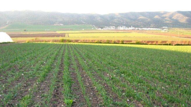 Producción ecológica en Andalucía.