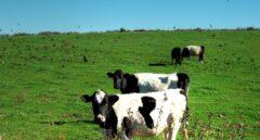 La primera sentencia por el 'cártel de la leche' reduce un 85% la indemnización a los ganaderos