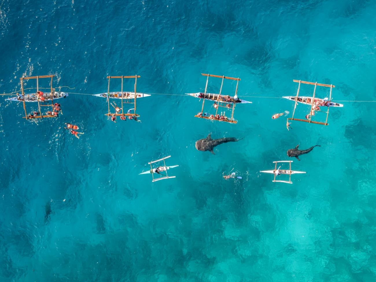 4. 'Tiburones ballena' de Bachir Moukarzel.