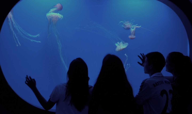 Medusas en el Oceanogràfic de Valencia