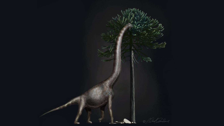 Paleontólogos estadounidenses han descubierto el pie de dinosaurio más grande jamás encontrado.