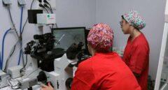 Un nuevo test no invasivo prevé mejorar un 10% la tasa de éxito de la reproducción asistida.
