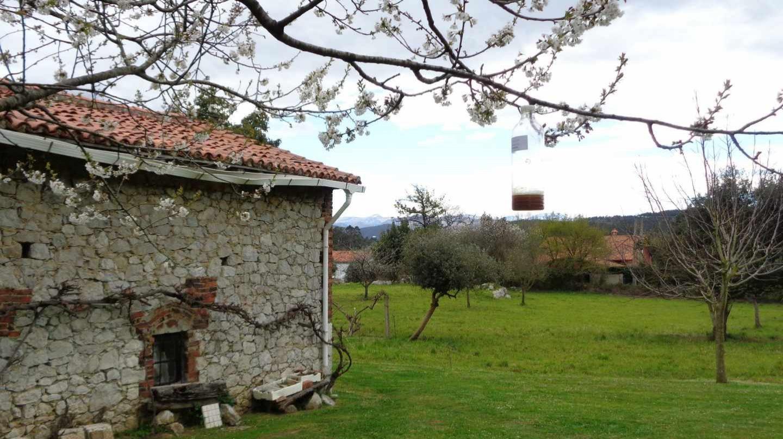 Trampa para avispa asiática en Galicia.