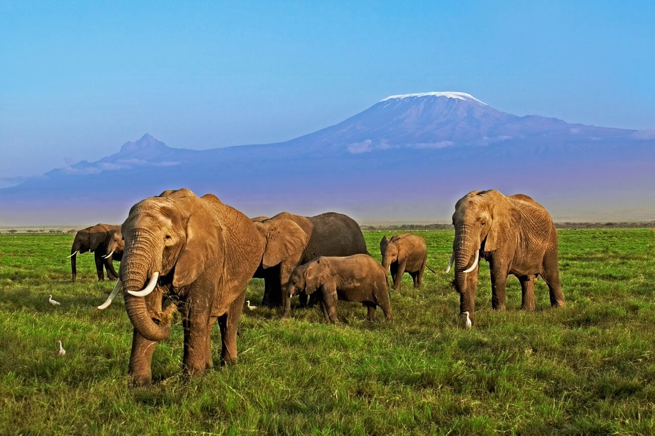 Inteligencia artificial al rescate del elefante