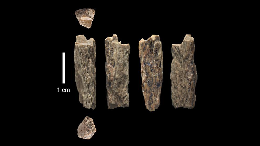 Fósiles utilizados en la investigación.