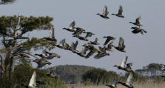 El devastador efecto medioambiental de la caza con munición de plomo