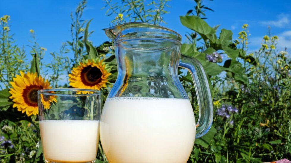 Tomar tres vasos de leche al día, sobre todo si es entera, protege el corazón y la vida.