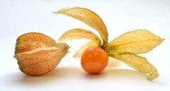 CRISPR: Corta-pega genético para domesticar al tomatillo asturiano
