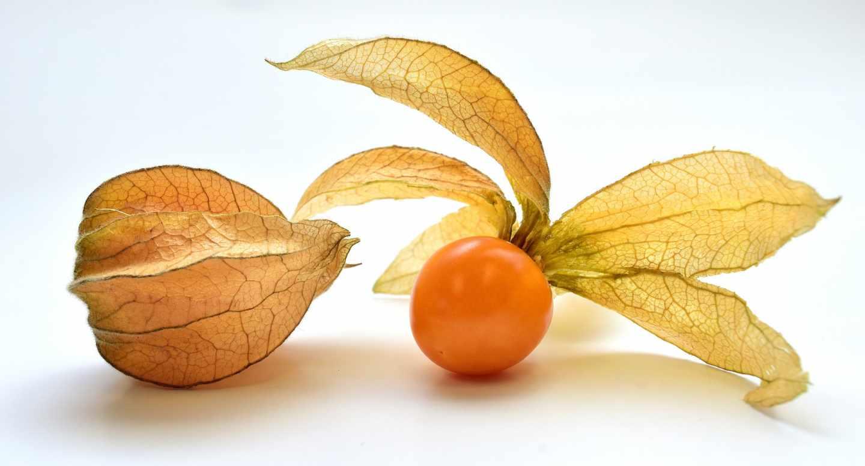 Fisalis, uchuva o tomatillo asturiano