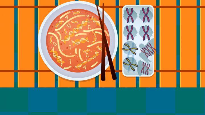 Comida y genética