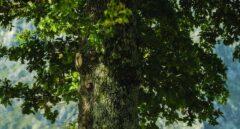 Julio Medem regresa a sus orígenes con 'El árbol de la sangre'