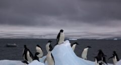Lo qué significa el cambio climático para la Antártida