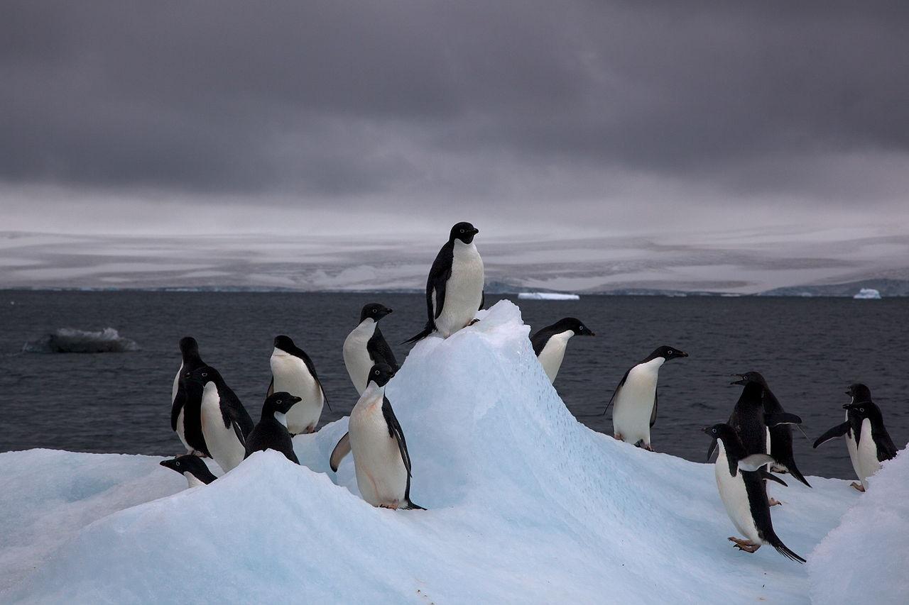 Pingüinos en la Antártida
