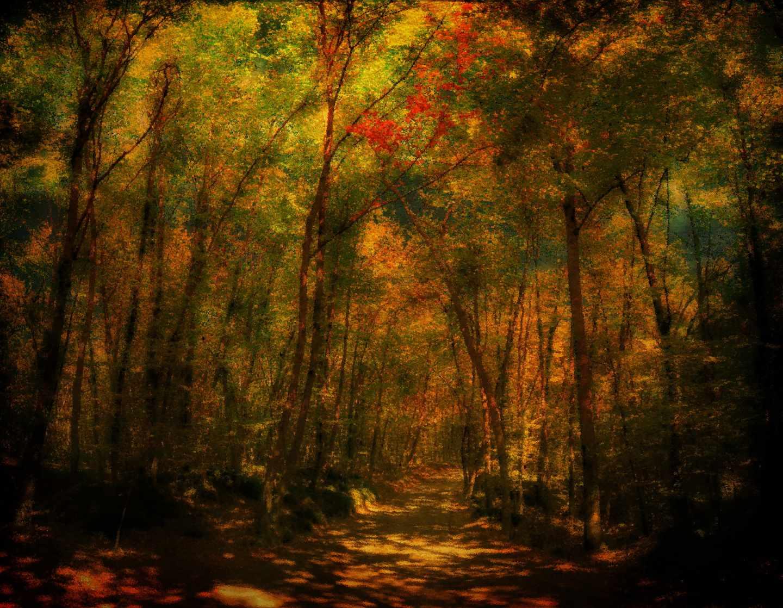 Bosque de Hayas de En Jordà