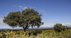 En busca de un gran vino de Madrid