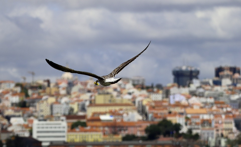 Gaviota sobrevolando una ciudad