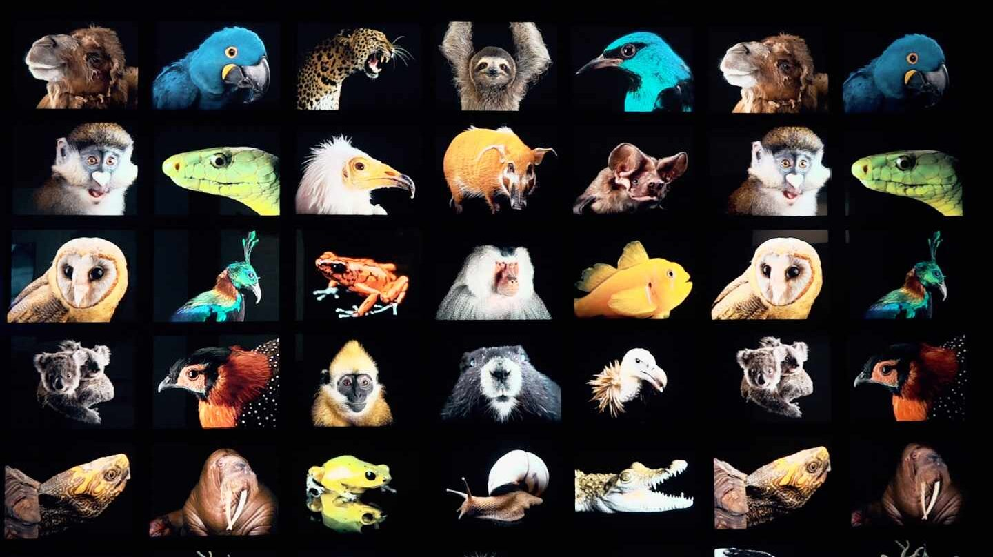 Photo Ark, de Joel Sartore
