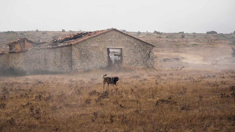 Perro pastor en la Merindad de Valdivieslso