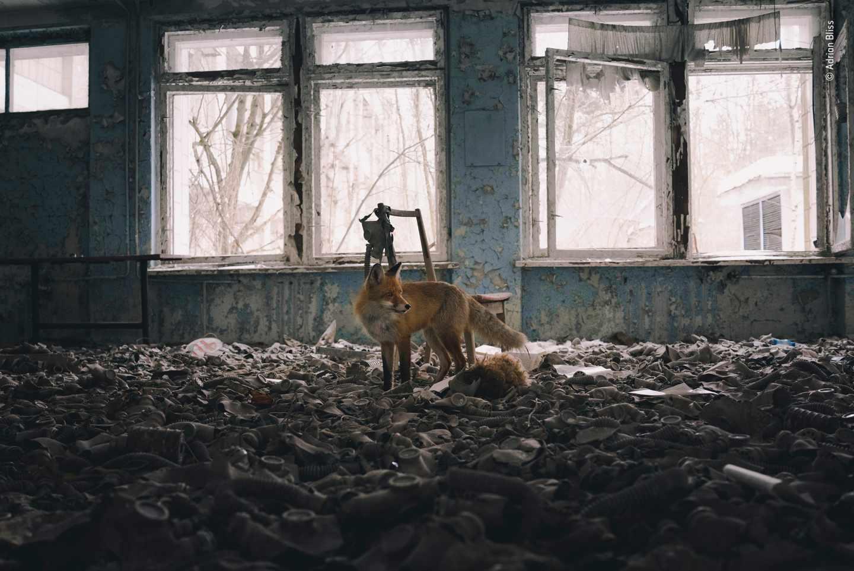 Visita a la escuela (Chernobyl)