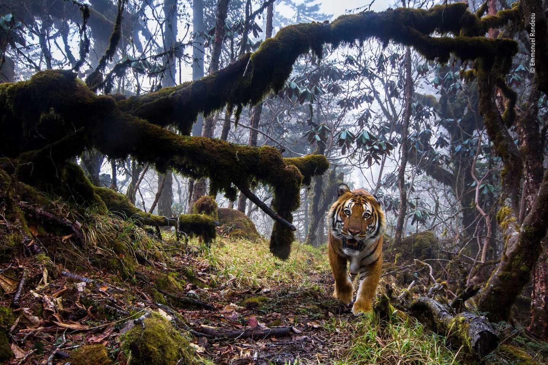 Tierra de tigres