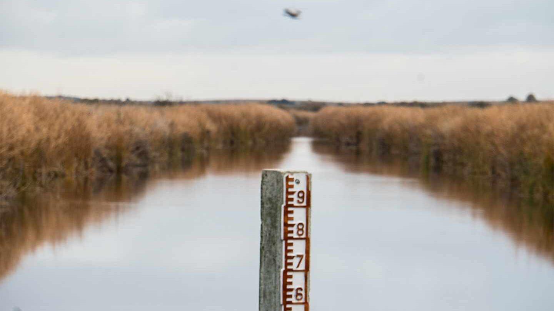 Nivel de agua en Las Tablas de Daimiel