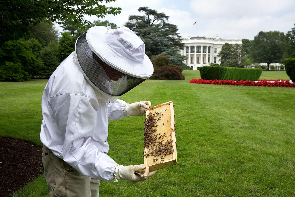 FOTO 2: Técnico apícola en los jardines de la Casa Blanca. Autor: Foto oficial de la Casa Blanca por Pete Souza