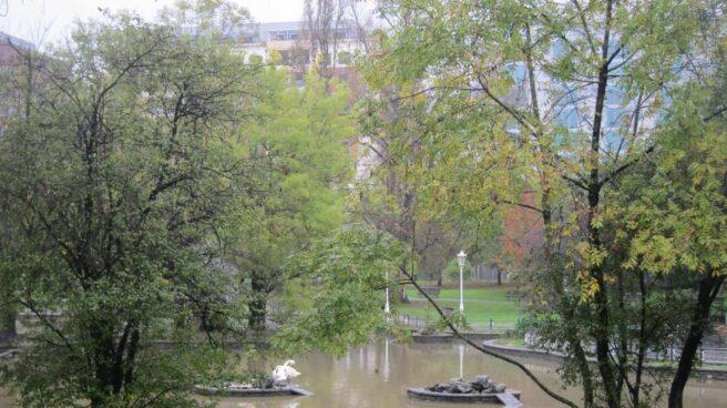 Veintidós árboles suplen la demanda de oxígeno de una persona al día