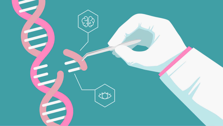 Un español ensaya un nuevo CRISPR más eficaz