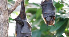 Murciélagos, el mejor insecticida
